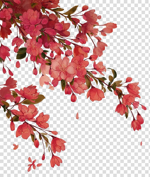 Red petaled flowers, Red Begonia, Begonia tree branches transparent.
