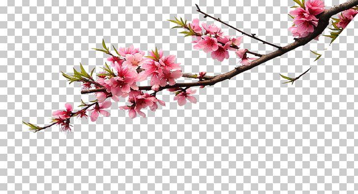 Cherry Blossom Pink Flower Bouquet Color PNG, Clipart, Artificial.