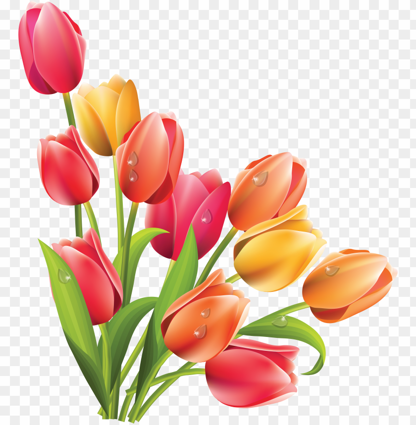 tulip clipart bucket flower.