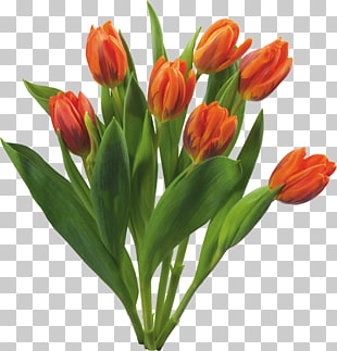 662 flowering Bulbs PNG cliparts for free download.
