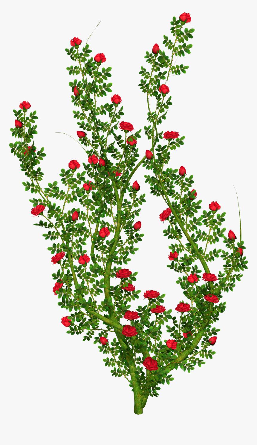 Clip Art Rose Bushes Clipart.