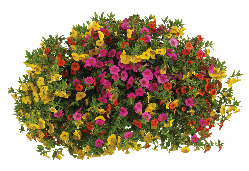 Flower Bushes Png (109+ images in Collection) Page 1.