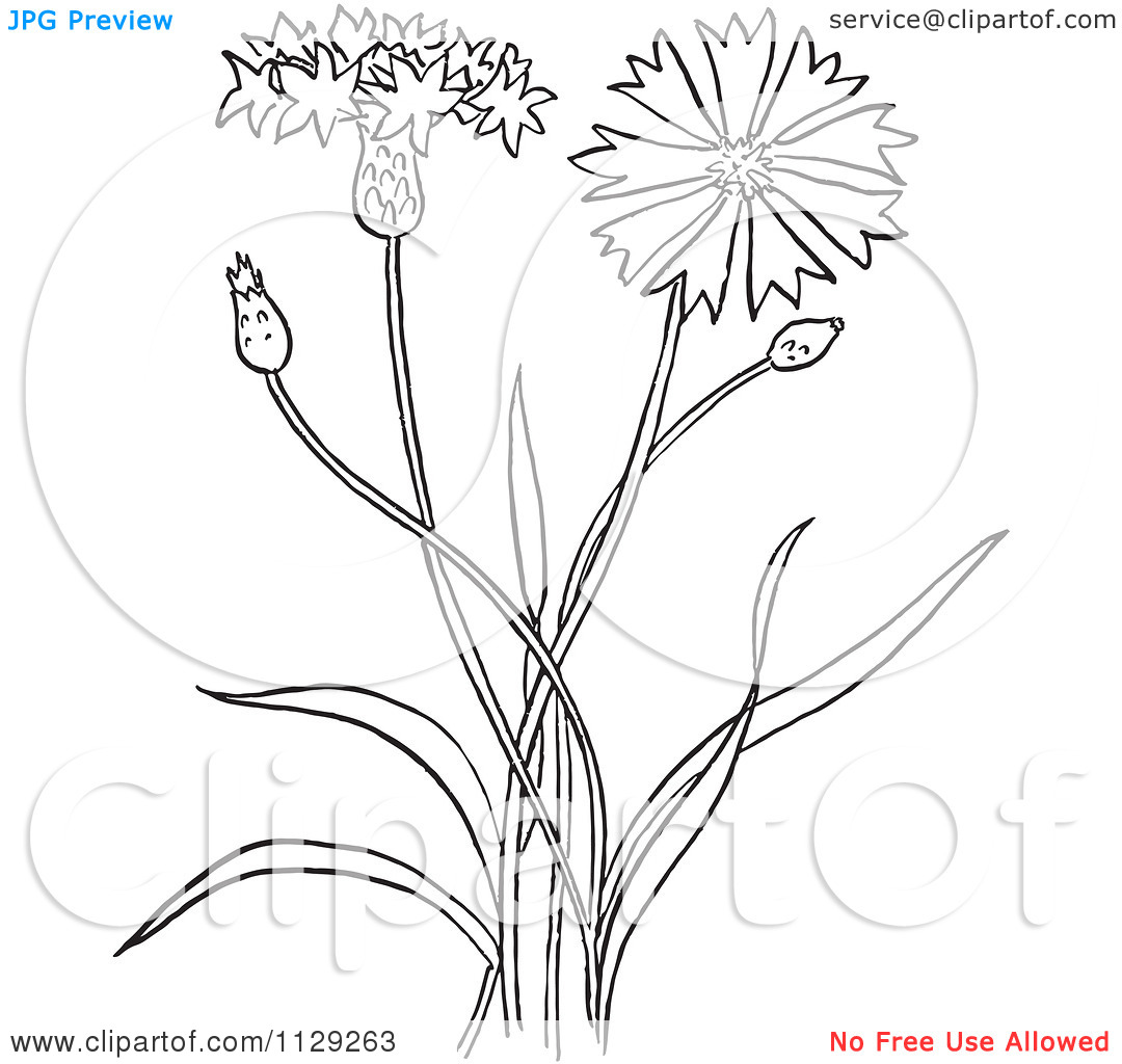 Cartoon Clipart Of An Outlined Outlined Bachelors Buttons Flower.