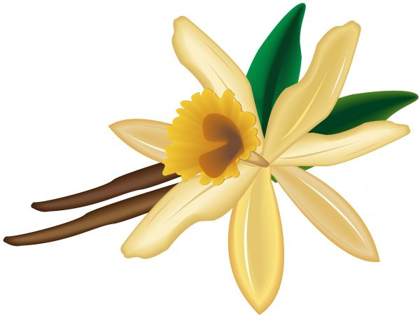 Flower capsules clipart #19