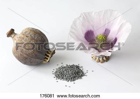 Flower capsules clipart #1