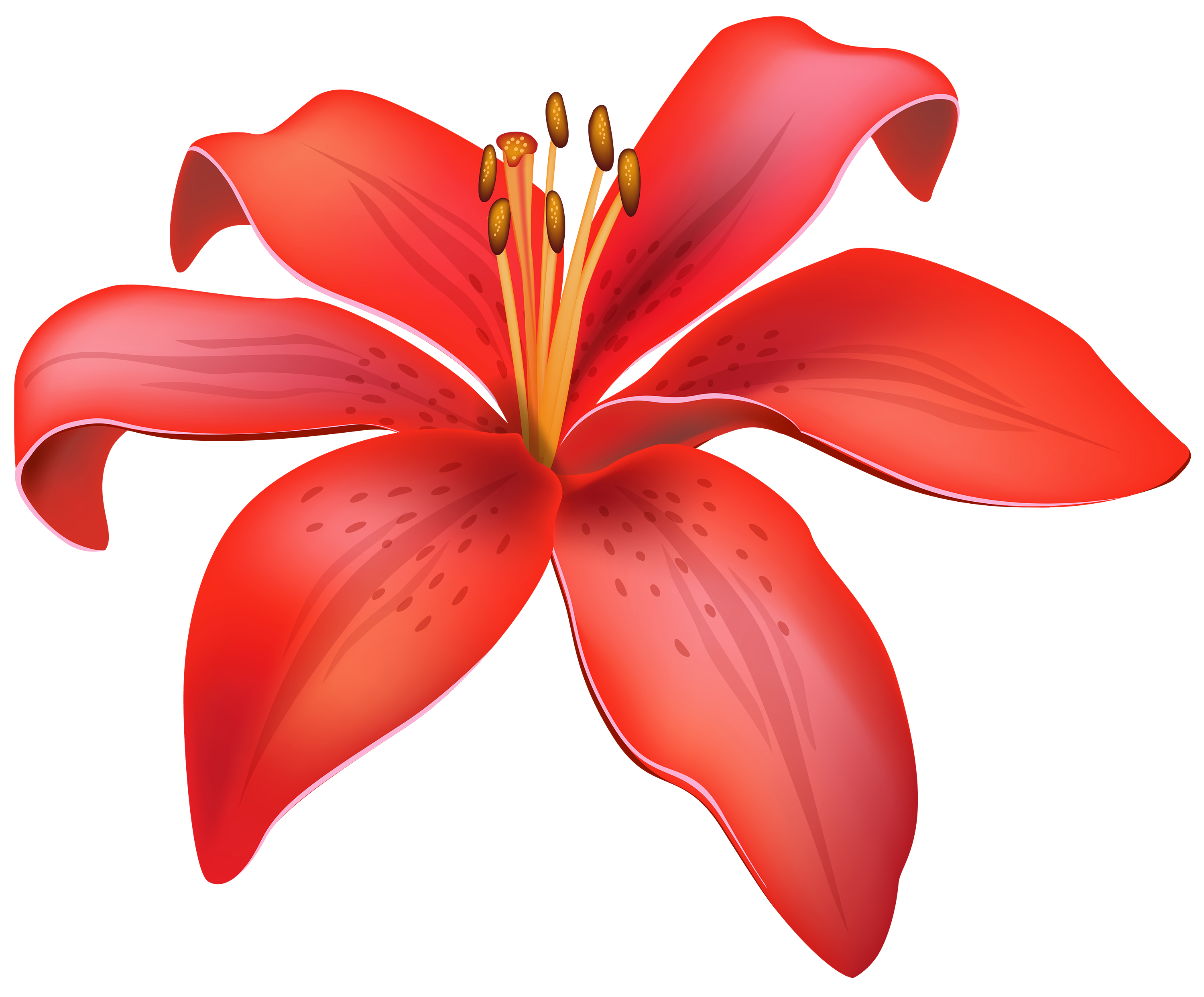 Red Lily Flower PNG Clipart.