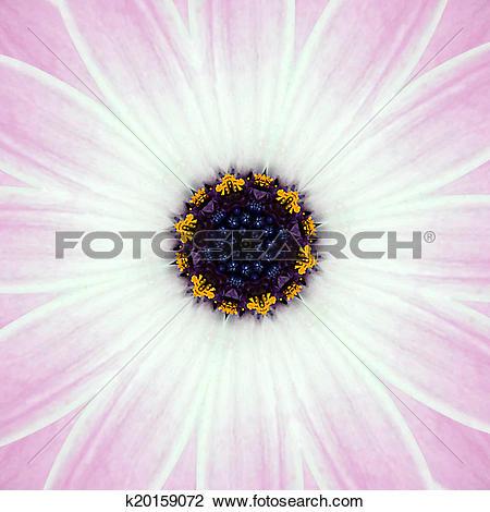 Clip Art of Pink Concentric Flower Center Mandala Kaleidoscope.
