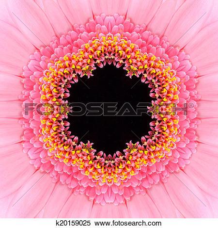 Stock Image of Pink Concentric Flower Center Mandala Kaleidoscope.