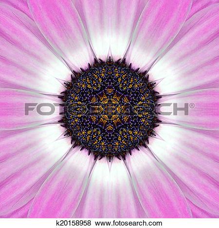 Stock Illustration of Pink Mandala Concentric Flower Center.