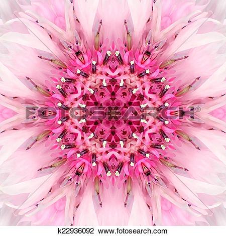 Stock Photo of Pink Mandala Flower Center. Concentric Kaleidoscope.