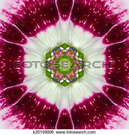 Stock Images of Pink Concentric Flower Center Mandala Kaleidoscope.