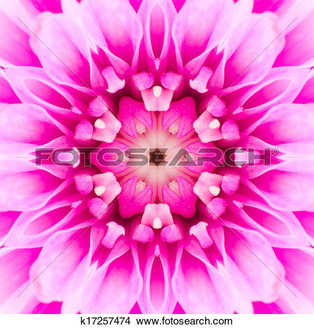 Stock Photo of Pink Concentric Flower Center. Mandala.