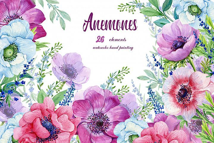 Anemones Watercolor . Flowers Clipart . Purple Flowers.