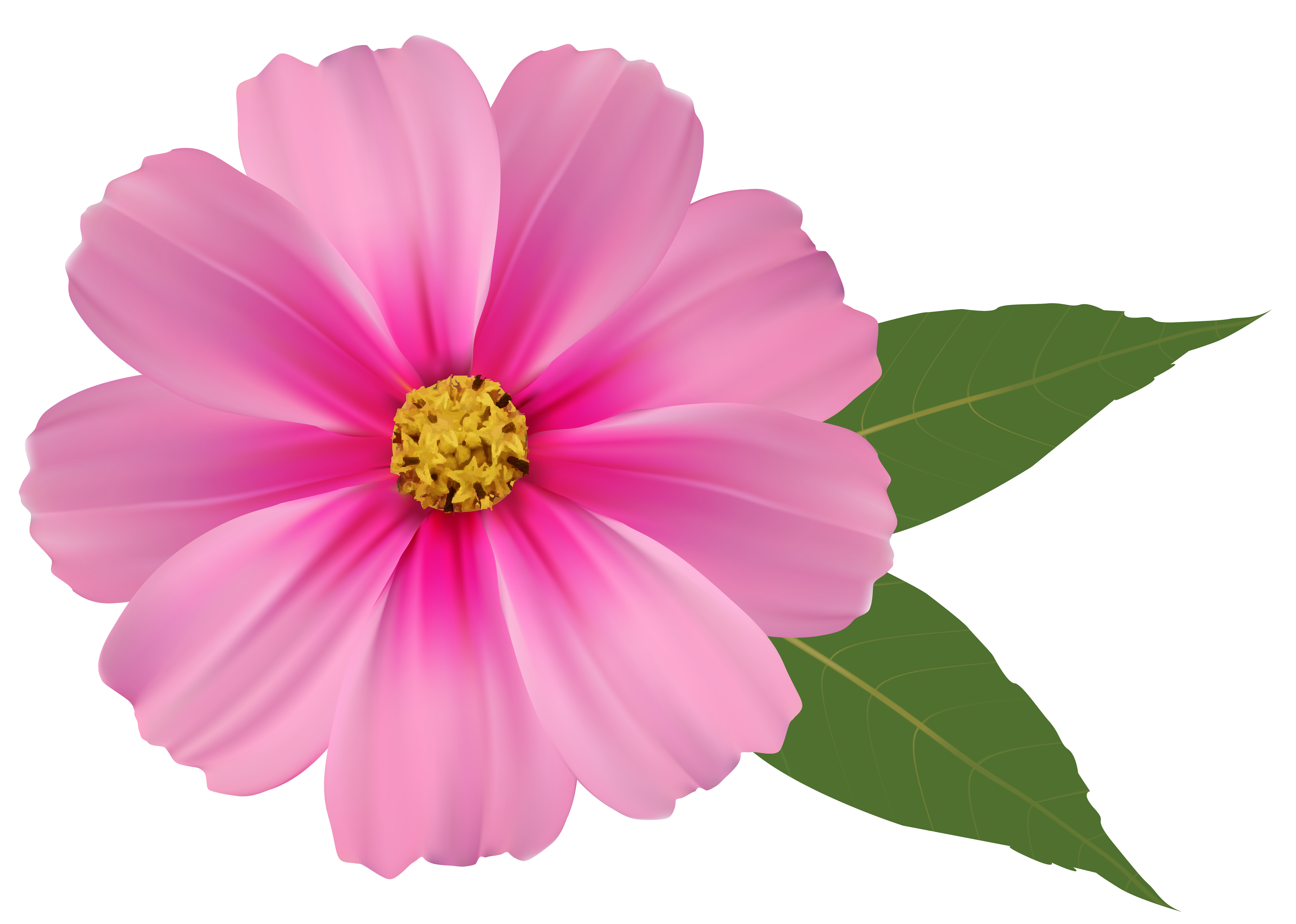 Pink Flower PNG Image Clipart.