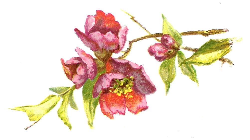 Antique Images: Free Flower Clip Art: Pink Rose Bouquet Graphic.