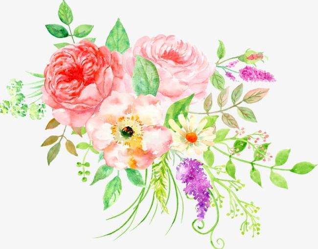 Beautiful Floral Watercolor Peony Flower Cluster PNG.