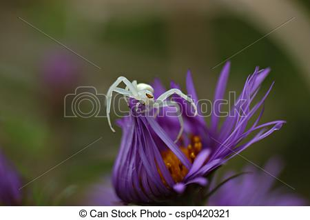 Stock Photography of Crab spider.