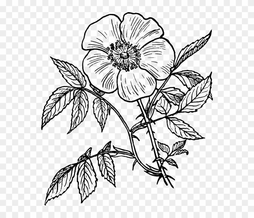 White Flower Clipart File.