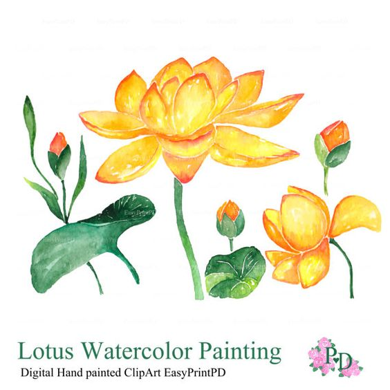 Flowers Clipart, Lotus Watercolor Clip Art, Digital Clipart.