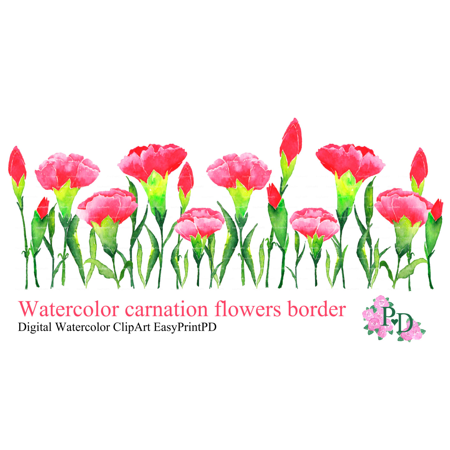 Carnation Flowers Clipart.