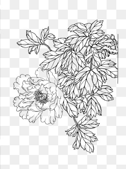 Flower Line Drawing Png, Vector, PSD, and Clipart With Transparent.