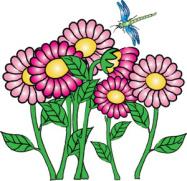 Flower Essences.
