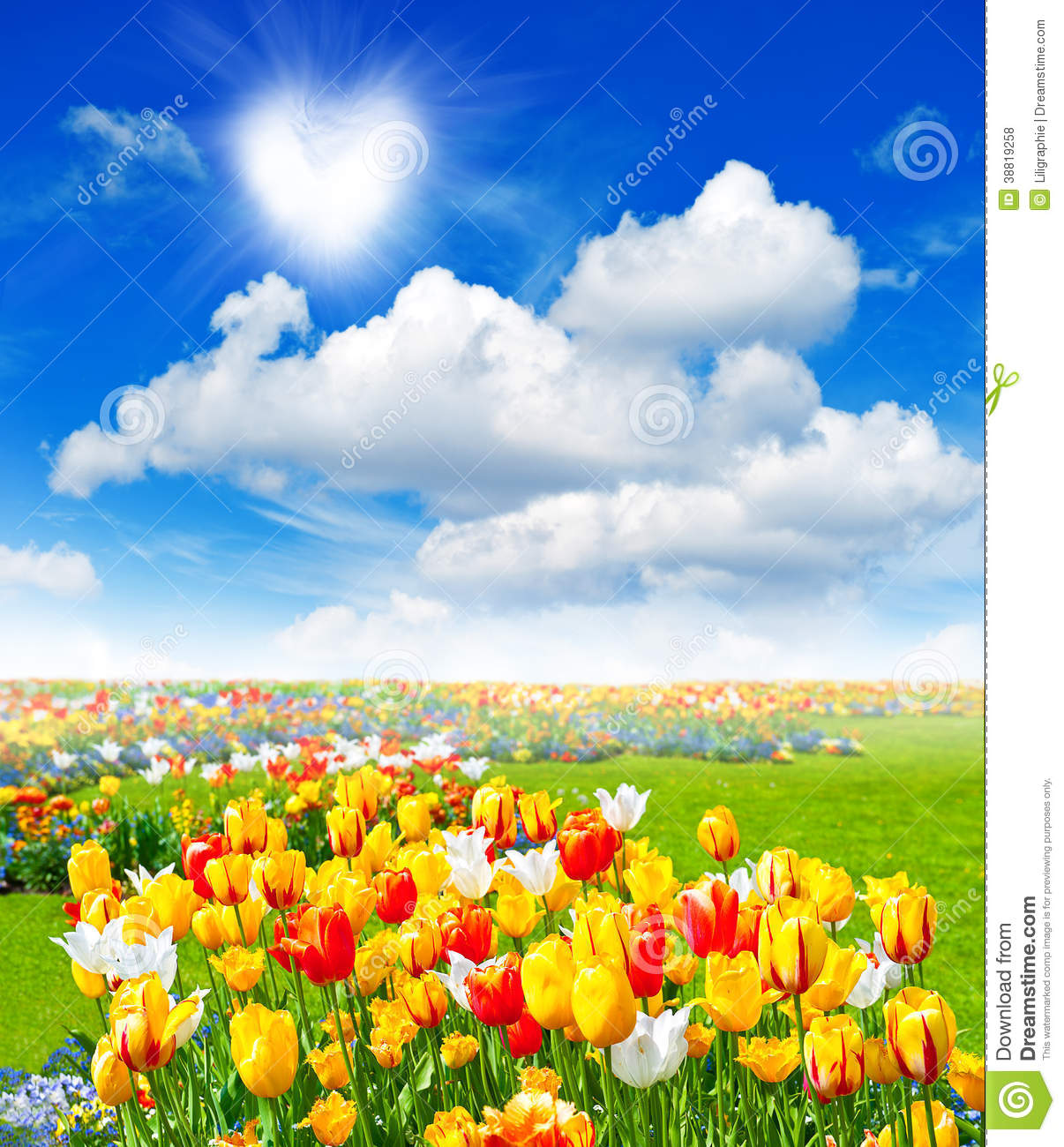 Flowers Field With Colorful Assorted Tulips Stock Photo.