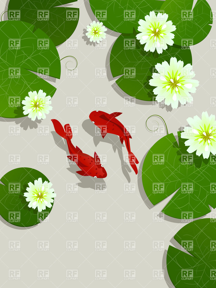 Koi fish and lotus leaves and flowers Vector Image #6479.