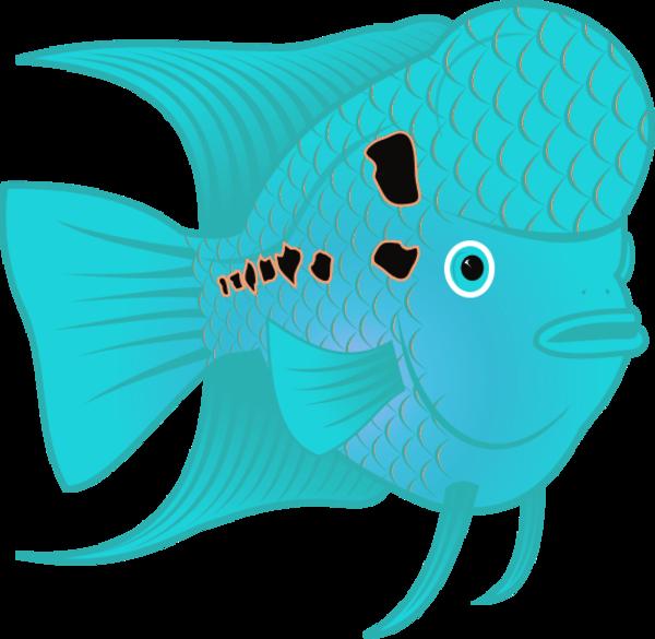 Flowerhorn Fish 2.