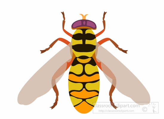Insect Clipart : flower.
