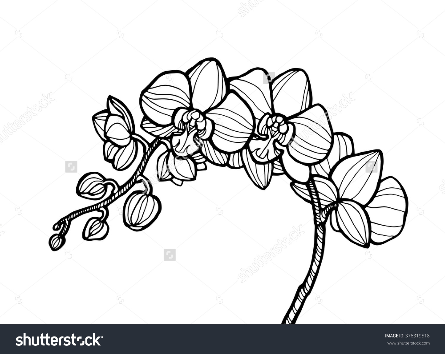 Exotic Orchid Flower Forest Wild Plant Stock Vector 376319518.