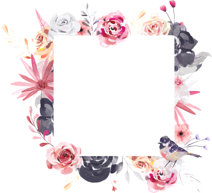 rose,pink,white,watercolor,free vector,transparent,flower,floral.