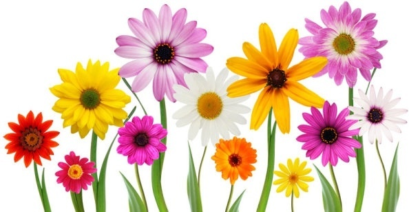 Hd flower pictures free stock photos download (13,106 Free stock.