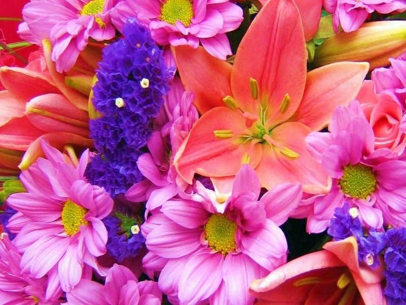 Beautiful Flower Wallpapers images hd free download.