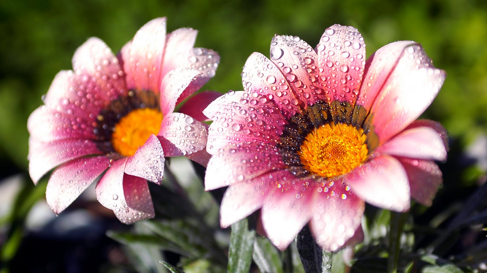 Download Flower Images Free.