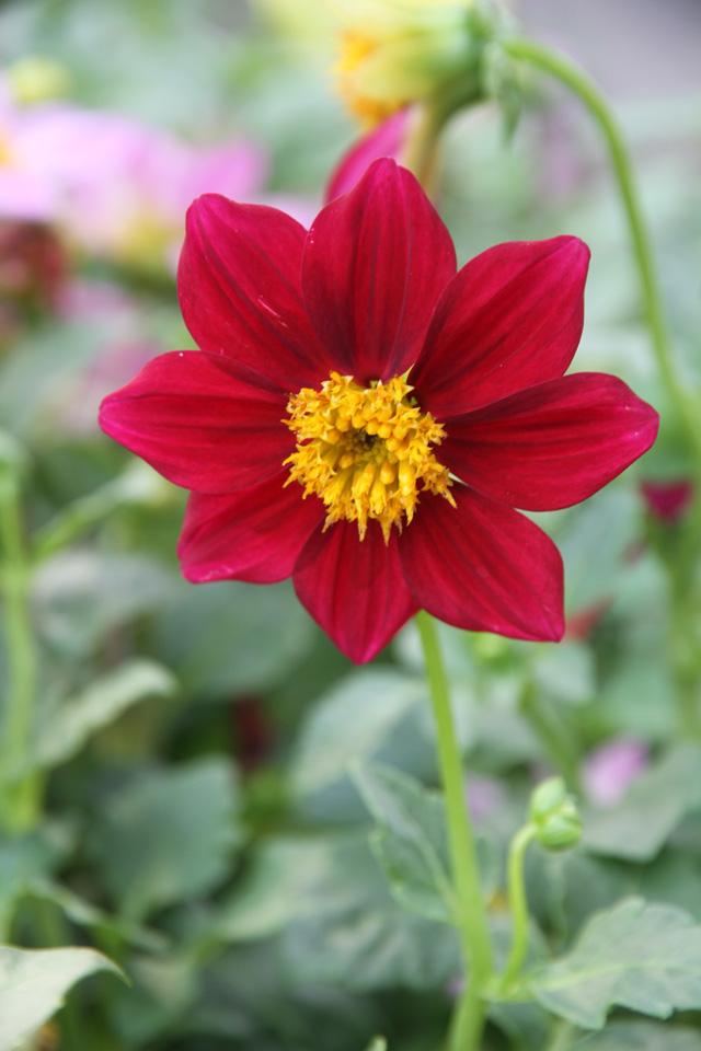Free Flower Pic.
