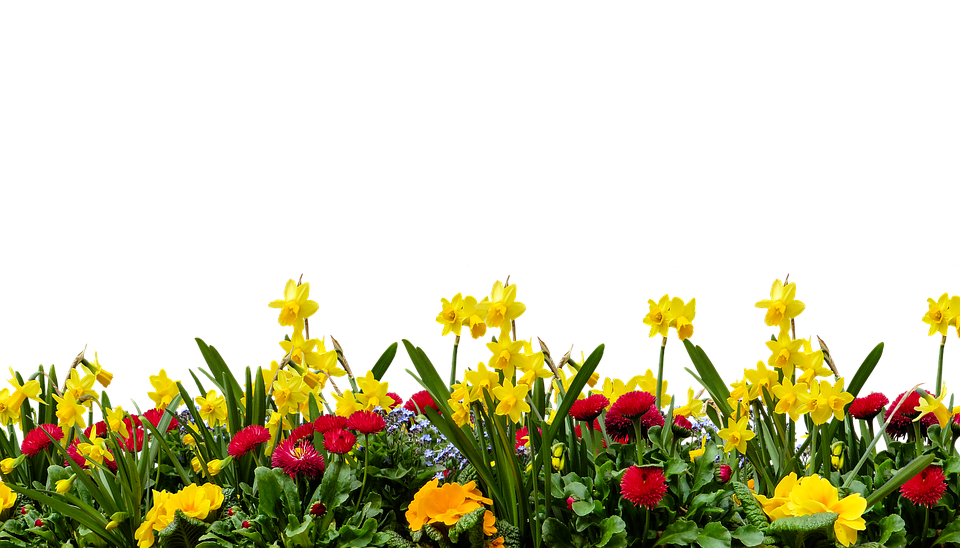 Flowers Garden Png Images.