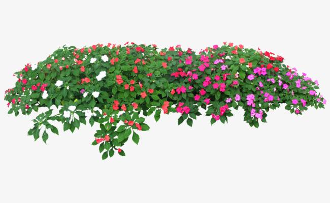 Rose Flower Garden, Flower Clipart, Garden Clipart, Rose Clipart PNG.