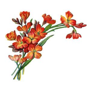 Graphics Flower.