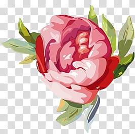 Flowers, pink flower graphic screenshot transparent.