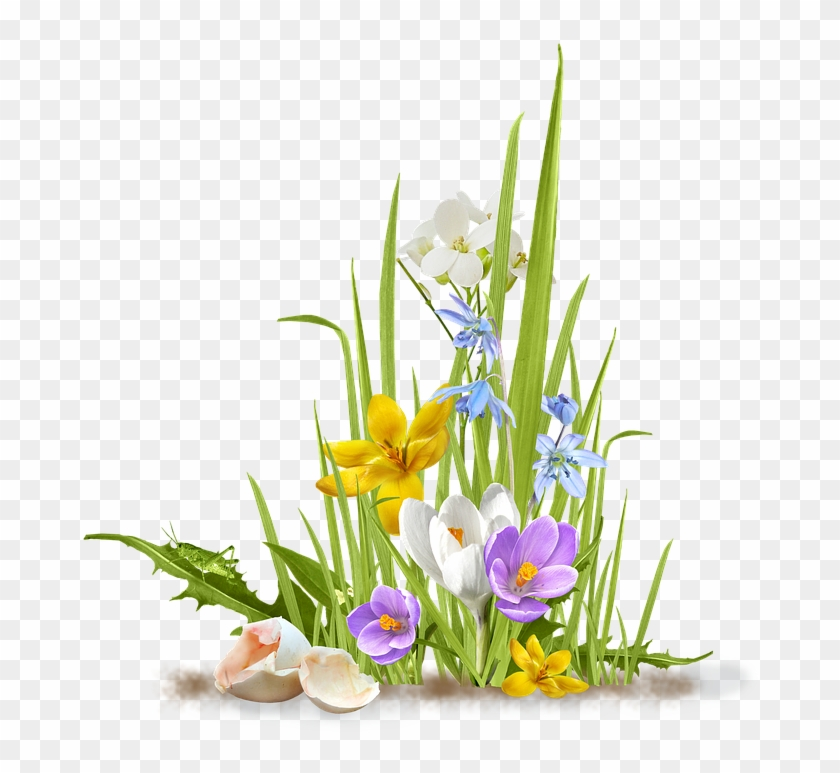 Spring, Flower, Crocus, Saffron, Grass, Shell, Egg.