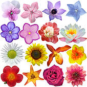Flower head Illustrations and Stock Art. 6,049 flower head.