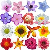 Flower head Illustrations and Stock Art. 6,049 flower head.
