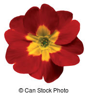 Flowerhead Stock Illustrations. 53 Flowerhead clip art images and.