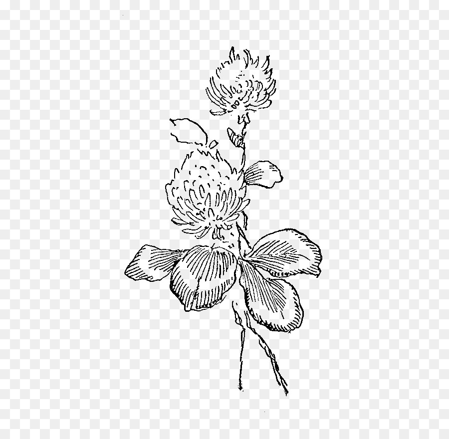 Flower Illustration Png & Free Flower Illustration.png Transparent.
