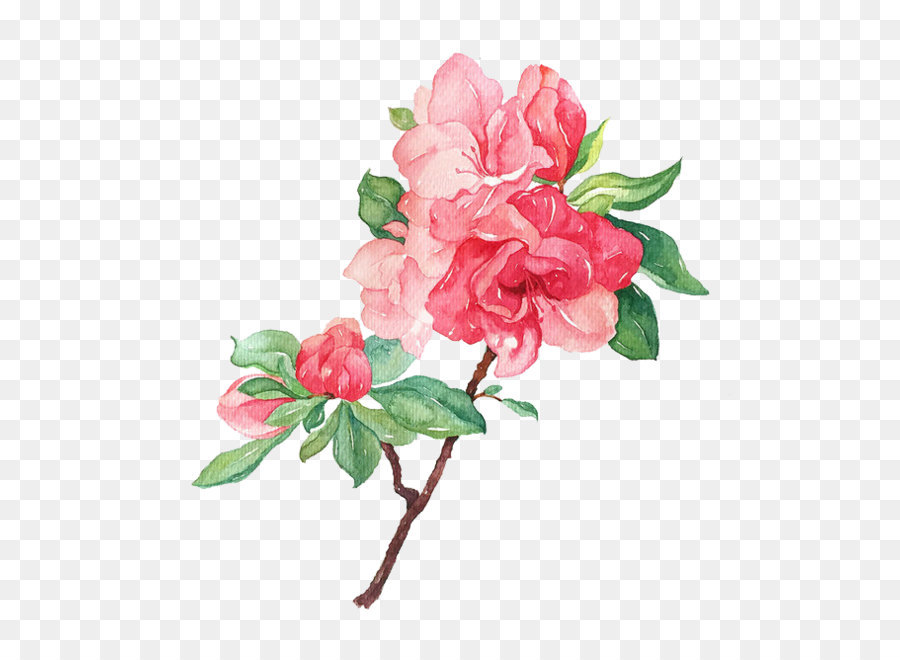 Garden roses Flower Illustration.