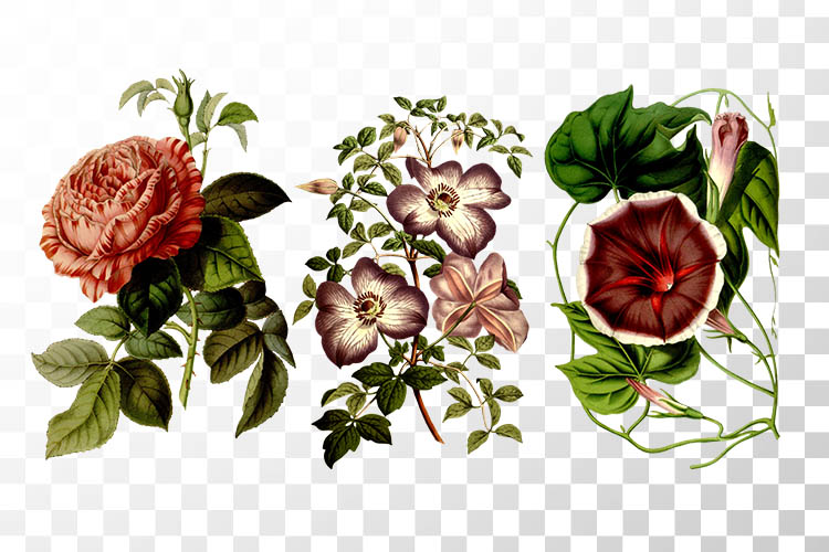 Free Vintage Flowers Clipart.