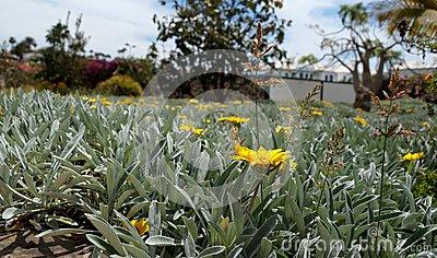 Gran Canaria Flower Stock Photo.