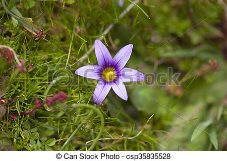 Stock Photo of Flora of Gran Canaria.