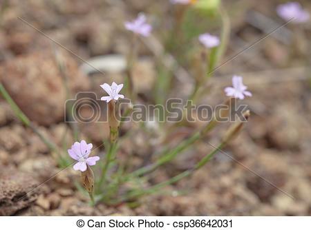Stock Photos of Flora of Gran Canaria.